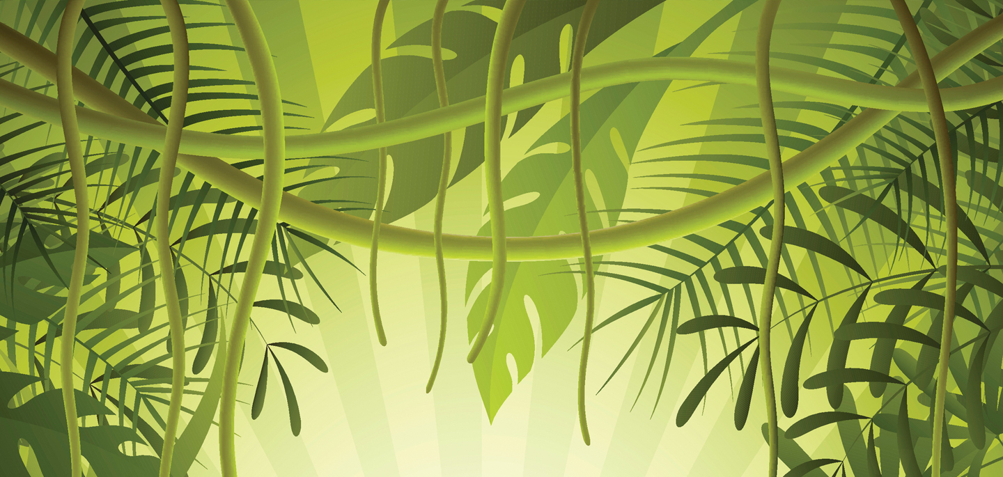 Image of tropical plants and vines